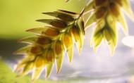 植物花卉微距摄影图片_40张