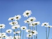 阳光下的鲜花图片_19张