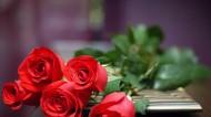 鲜艳玫瑰花图片_6张
