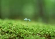 嫩綠的小苗和嫩芽圖片_15張