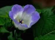 蓝紫色小野花图片_20张