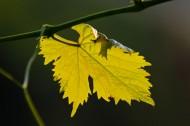 早秋的叶子图片_10张