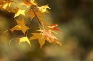 秋季凋零的叶子图片_9张