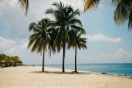 常绿乔木椰子树图片_11张