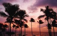 低海拔生长的椰子树图片_10张