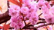 绚烂的粉色?;ㄍ计琠10张