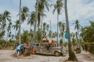 一小片椰树林图片_14张