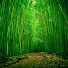 幽靜的竹林圖片_7張