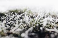 早霜覆盖草地的图片_10张
