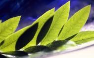 植物花卉微距摄影图片第二组_20张
