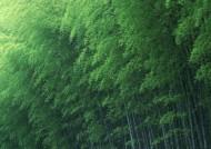 炎炎夏日里的一抹清凉竹林图片_17张