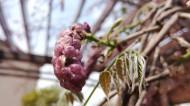紫色的观赏植物图片_10张