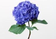 紫色花朵图片_14张