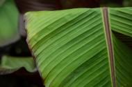 棕櫚樹葉子圖片_11張