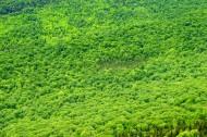 绿油油的树木图片_10张