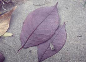 一组意境感紫色系列背景图片欣赏