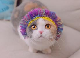 一只超心爱的小猫猫烫了新发型图片观赏