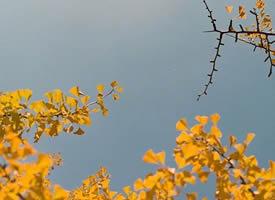 秋天 美麗的季節 收獲的季節 金黃的季節