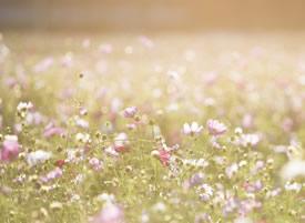 一组小清新意境超美的花卉壁纸图片