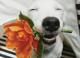 不管若何,这只心爱的狗狗都笑怼每天哦