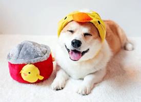 一组超心爱面带浅笑的小狗狗图片观赏