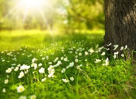 一組綠色花草,草叢高清護眼壁紙欣賞