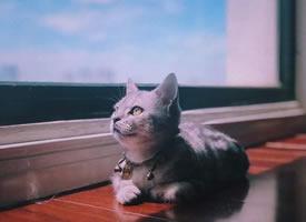 小猫45度望着窗外的画面,好美