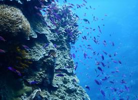 一组海洋里成群结队的鱼群图片欣赏