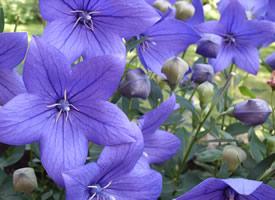 一组紫色高贵大气的桔?;ㄍ计郎?><i>       一组紫色高贵大气的      </i></a><a href=