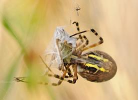 一组各式各样的蜘蛛高清图片欣赏