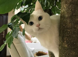 在树上蓝色大年夜眼睛的小猫猫图片观赏
