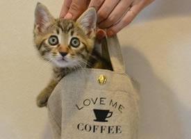 一组心爱灵巧的小猫图片观赏