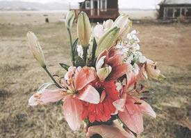开启元气满满的唯美好看花束图片