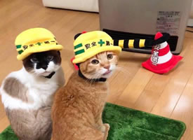 两只带安然帽超心爱的小猫图片观赏