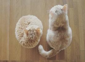 小猫猫的喷鼻酥软糯,出口即化的大年夜屁股