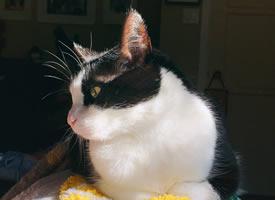 晒太阳晒得暖乎乎软乎乎的小猫宝