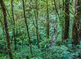漂亮的热带雨林风光高清桌面壁纸