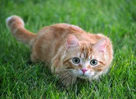 一说起猫咪,只要激光笔和逗猫棒稍稍能讨它们欢心