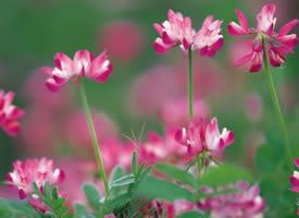 一组简单美丽的粉色小花图片欣赏