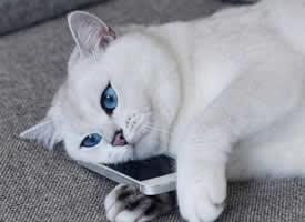 发明一只合适做神情包素材的猫咪,请自在发挥