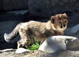 阳光下的小奶豹们,在闪闪发光啊