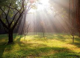 陽光灑進樹林的唯美景象圖片欣賞