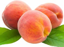 成熟的水蜜桃略呈球形,表面裹着一层短短的绒毛