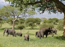 一組群居動物可愛的大象高清圖片欣賞
