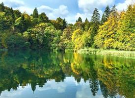 富含負離子的清新森林公園風景壁紙圖片