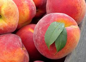 桃子一股清新的味道而且还有一种比蜂蜜都要甜的汁水