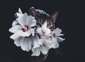 一组小猫加上鲜花的超有意境感的拍摄图片