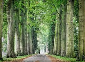 一组春意盎然的树林图片欣赏