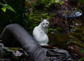 一组超级可爱惹人怜悯的流浪小猫图片