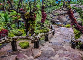 一组森林公园美景高清图片欣赏
